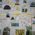 Plan /Recherche d'arbres autour d'Auberive 2004